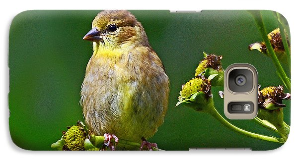 Galaxy Case featuring the photograph Late Summer Finch by Rodney Campbell