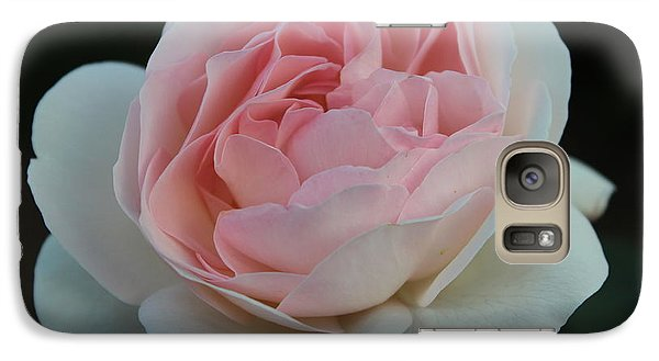 Galaxy Case featuring the photograph Late Summer's Rose by Patricia Hiltz