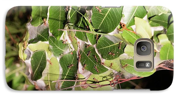 Leaf-stitching Ants Making A Nest Galaxy S7 Case by Tony Camacho