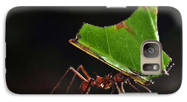 Leafcutter Ant Galaxy S7 Case by Francesco Tomasinelli