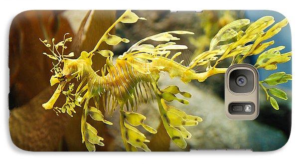 Galaxy Case featuring the photograph Leafy Sea Dragon by Shane Kelly