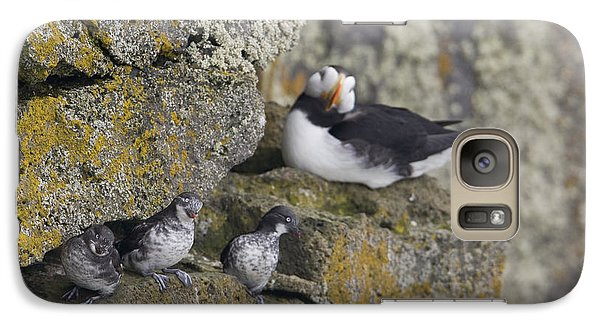 Least Auklets Perched On A Narrow Ledge Galaxy S7 Case