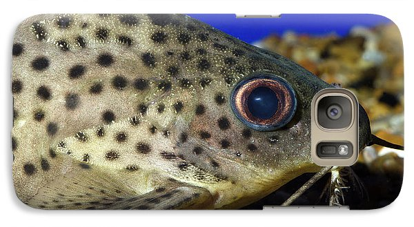 Leopard Sailfin Pleco Galaxy S7 Case by Nigel Downer