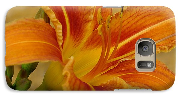 Galaxy Case featuring the photograph Lily On Pine by Gene Cyr