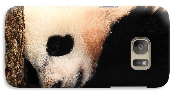 Galaxy Case featuring the photograph Little Bear's Favorite Tree by Olivia Hardwicke