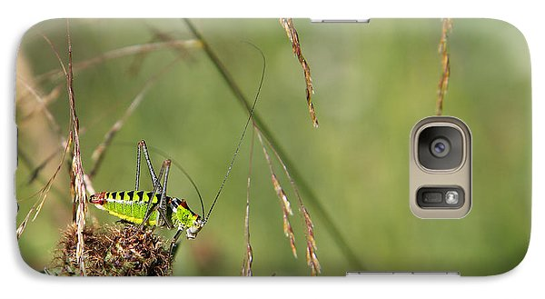 Galaxy Case featuring the photograph Long-horned Katydid by Jivko Nakev