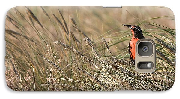 Long-tailed Meadowlark Galaxy S7 Case by John Shaw