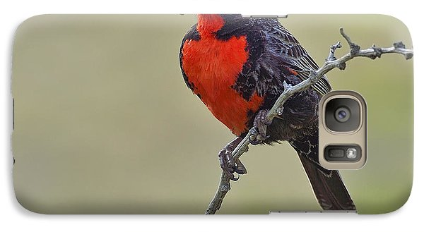 Long-tailed Meadowlark Galaxy S7 Case by Tony Beck