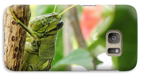 Galaxy Case featuring the photograph Lubber Grasshopper by TK Goforth