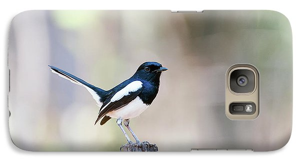 Magpies Galaxy S7 Case - Madagascan Magpie-robin Male by Dr P. Marazzi