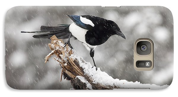 Magpie Out On A Branch Galaxy Case by Tim Grams