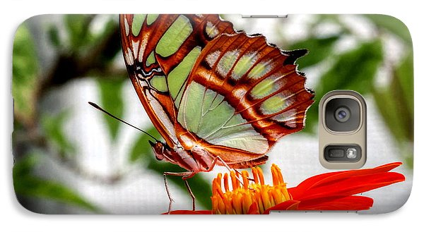Galaxy Case featuring the photograph Malachite Butterfly On A Mexican Coneflower by Larry Trupp