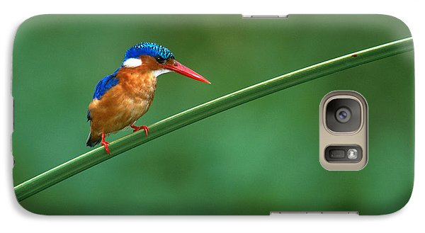 Malachite Kingfisher Tanzania Africa Galaxy S7 Case by Panoramic Images
