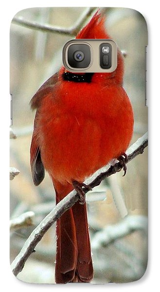 Galaxy Case featuring the photograph Male Cardinal  by Janette Boyd