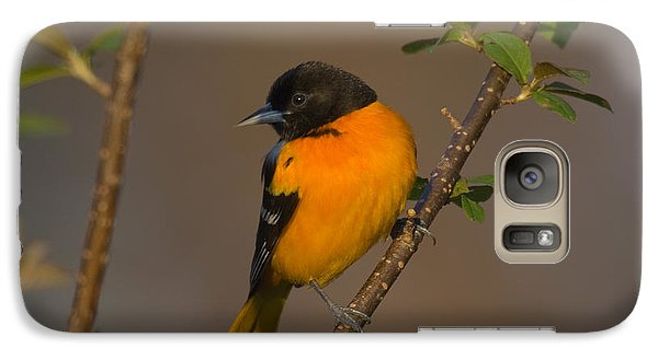 Male Northern Oriole Galaxy S7 Case by Thomas and Pat Leeson