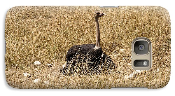 Male Ostrich Sitting On Communal Eggs Galaxy S7 Case by Gregory G. Dimijian, M.D.