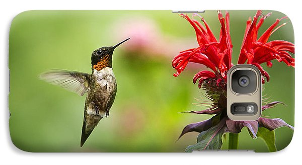 Male Ruby-throated Hummingbird Hovering Near Flowers Galaxy S7 Case by Christina Rollo