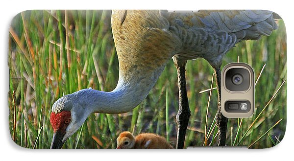 Galaxy Case featuring the photograph Male Sandhill With 4 Day Old Chick by Larry Nieland