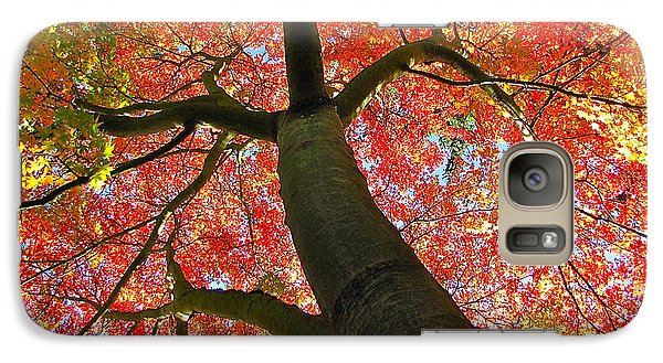 Galaxy Case featuring the photograph Maple In Autumn Glory by Sean Griffin