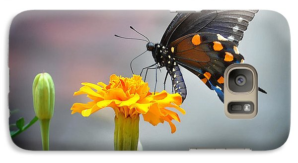 Galaxy Case featuring the photograph Marigold Swallowtail  by Nava Thompson