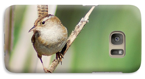 Galaxy Case featuring the photograph Marsh Wren by Erin Kohlenberg