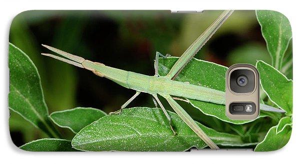 Mediterranean Slant-faced Grasshopper Galaxy S7 Case by Nigel Downer
