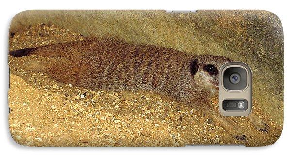 Meerkat Galaxy S7 Case - Meerkat Resting by Nigel Downer