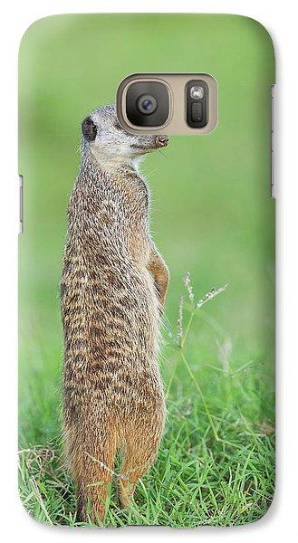 Meerkat Galaxy S7 Case - Meerkat Standing On Guard Duty by Peter Chadwick