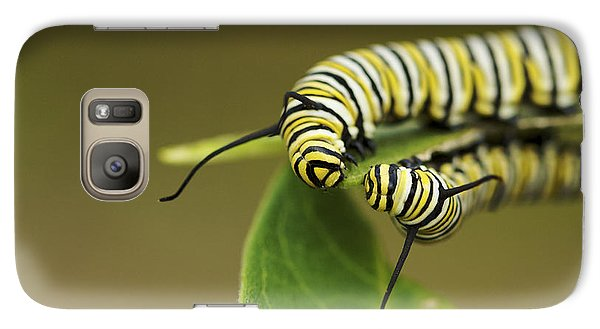 Galaxy Case featuring the photograph Meeting In The Middle - Monarch Caterpillars by Jane Eleanor Nicholas