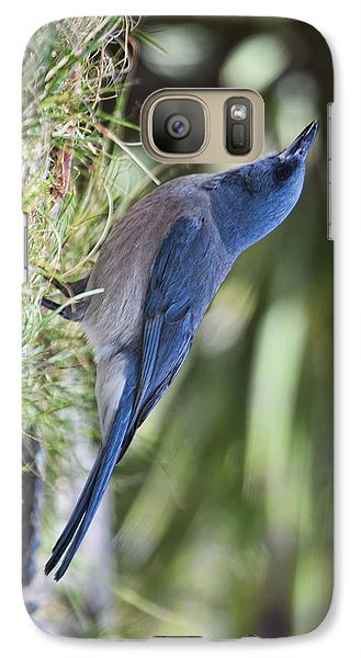 Galaxy Case featuring the photograph Mexican Jay Drinking - Phone Case Design by Gregory Scott