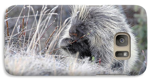 Galaxy Case featuring the photograph Mister Porcupine - Denali Alaska by Dyle   Warren