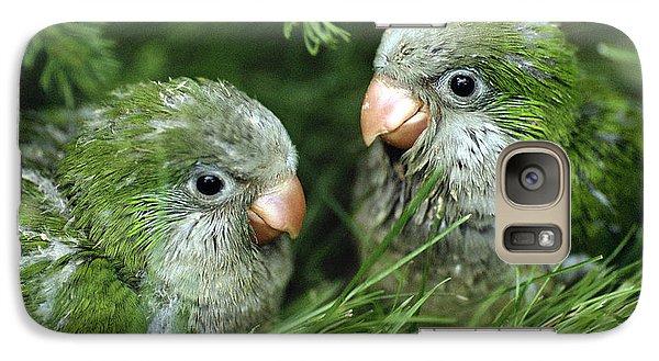 Monk Parakeet Chicks Galaxy Case by Paul J. Fusco