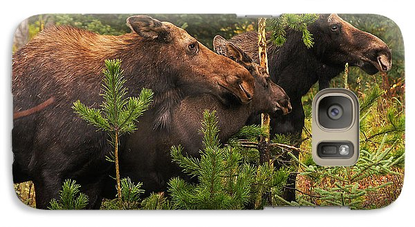 Galaxy Case featuring the photograph Moose Family At The Shredded Pine by Stanza Widen