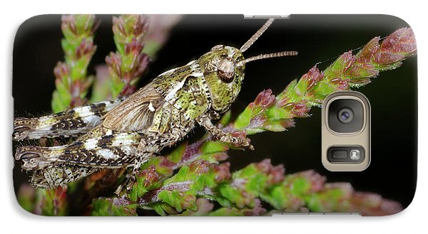 Mottled Grasshopper Juvenile Galaxy Case by Nigel Downer