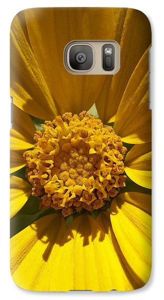 Galaxy Case featuring the photograph Mountain Daisy by Jeff Goulden