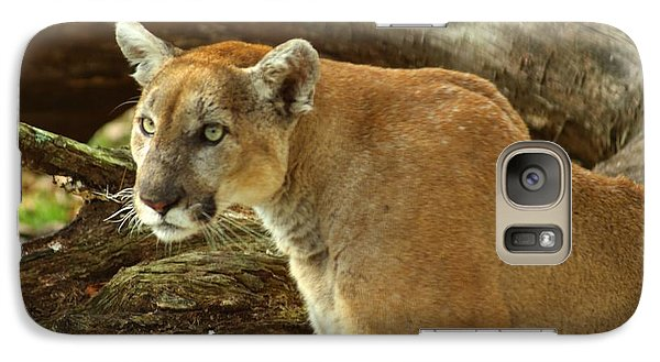 Galaxy Case featuring the photograph Mountian Lion by Donald Williams