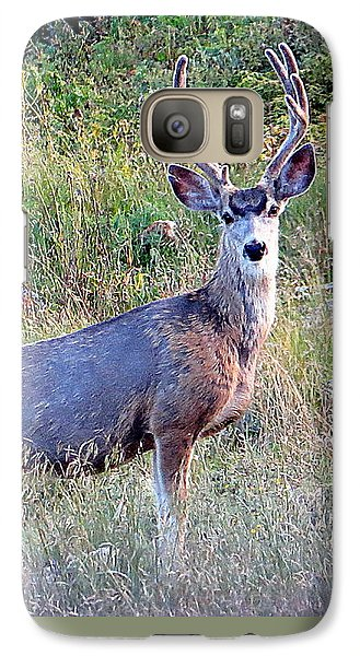 Mule Deer Buck Galaxy S7 Case by Karen Shackles