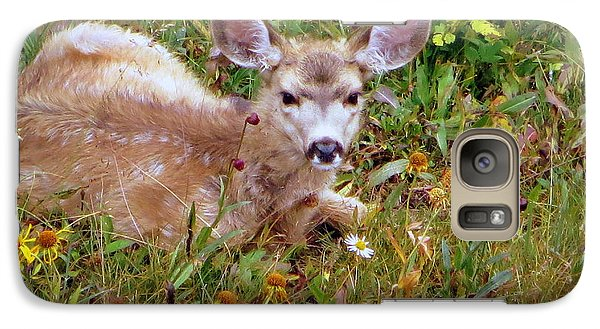 Mule Deer Fawn Galaxy S7 Case by Karen Shackles