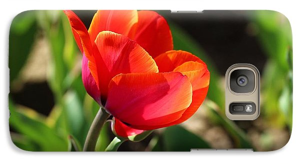 Galaxy Case featuring the photograph Multicolored Tulip by Lynn Hopwood