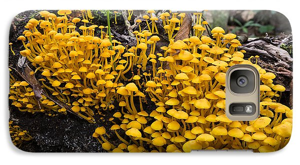 Mushrooms On Tree Trunk Panguana Nature Galaxy Case by Konrad Wothe