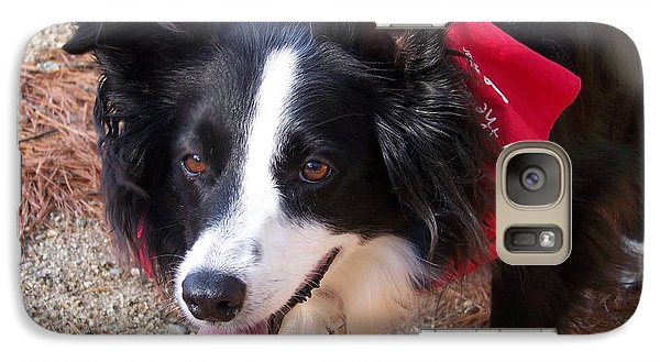 Galaxy Case featuring the photograph Female Border Collie by Eunice Miller