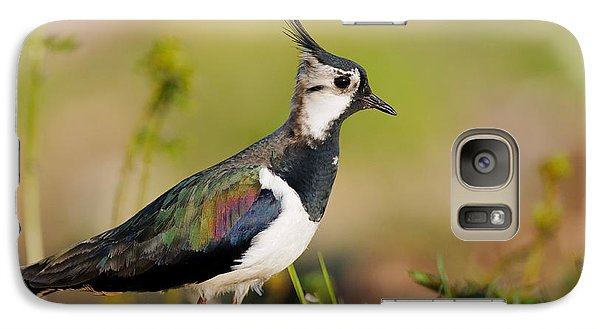 Lapwing Galaxy S7 Case - Northern Lapwing by Willi Rolfes