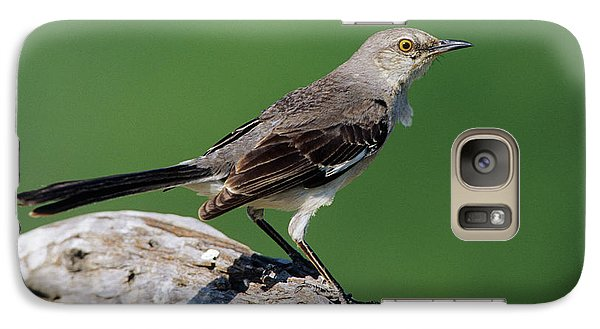 Mockingbird Galaxy S7 Case - Northern Mockingbird (mimus Polyglottos by Richard and Susan Day