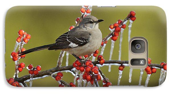 Mockingbird Galaxy S7 Case - Northern Mockingbird (mimus Polyglottos by Rolf Nussbaumer