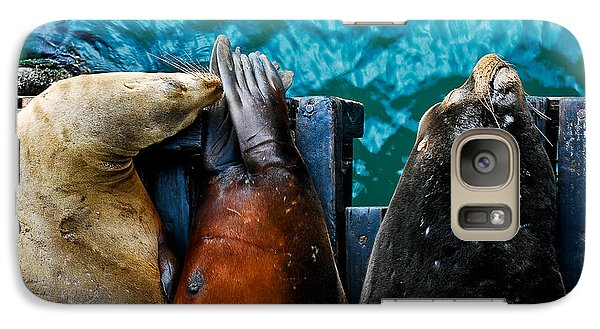 Galaxy Case featuring the photograph Odd Man Out California Sea Lions by Terry Garvin