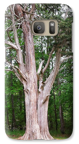 Galaxy Case featuring the photograph Old Georgia Cedar by Pete Trenholm