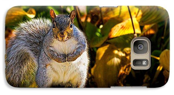 One Gray Squirrel Galaxy S7 Case by Bob Orsillo
