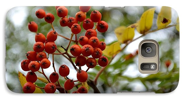 Galaxy Case featuring the photograph Orange Autumn Berries by Scott Lyons