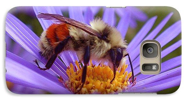 Orange-banded Bee Galaxy S7 Case