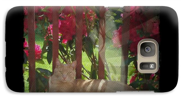 Galaxy Case featuring the photograph Orange Cat In The Shade by Absinthe Art By Michelle LeAnn Scott